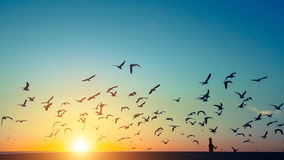 Silhouettes flock of seagulls over the Ocean Stock Photo