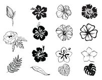 Silhouettes of flowers black and white isolated. Silhouettes of hibiscus, anemone, frangipani, rose flowers black and white isolated, vector, illustration, bloom Stock Images