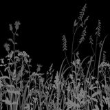 Silhouettes  of flowers and grass at night Royalty Free Stock Photo
