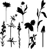Silhouettes  of flowers and grass Royalty Free Stock Photos