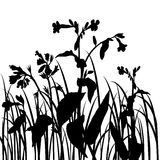 Silhouettes  of flowers and grass Stock Photos