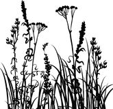 Silhouettes  of flowers and grass Stock Photo
