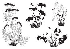 Silhouettes of flowers and herbs Royalty Free Stock Photo