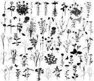 66 silhouettes of flowers and plants. 10 silhouettes of insects. Stock Images