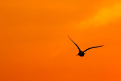 Silhouettes of flying bird. Royalty Free Stock Images