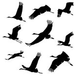 Silhouettes of flying birds. cranes. Black and white vector illustration