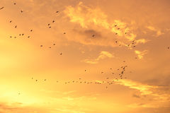 Silhouettes of flying birds with sunset sky and cloud Royalty Free Stock Photos