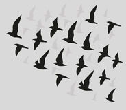 Silhouettes of flying birds Stock Photography