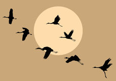 Silhouettes flying cranes stock illustration