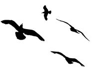 Silhouettes of flying seagulls. Stock Image