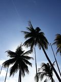 Silhouettes of four coconut trees in the morning stock photo