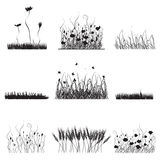 Silhouettes of grass, flowers  Stock Photos