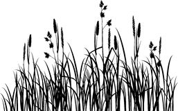 Silhouettes of grass Stock Photo