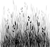 Silhouettes of grass Royalty Free Stock Photos