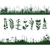 Silhouettes grass Stock Images