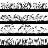Silhouettes of grass with spikelets and umbelliferous plant Royalty Free Stock Images