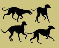 Silhouettes of greyhounds Royalty Free Stock Photo