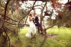 Silhouettes of a groom and bride sitting on a tree Stock Photo