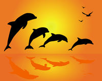 Silhouettes of a group of dolphins. On an orange background Royalty Free Stock Images