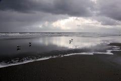 Silhouettes of gulls on beach Stock Photo