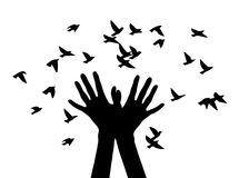 Silhouettes of hands, letting the birds. Black and white vector illustration depicting hands, letting out a flock of birds Royalty Free Stock Photo