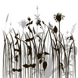 Silhouettes of herbs and flowers Stock Photo