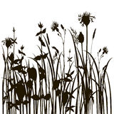 Silhouettes of herbs and flowers Royalty Free Stock Photo