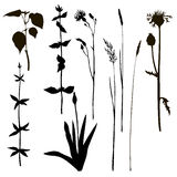 Silhouettes of herbs and flowers Royalty Free Stock Photos
