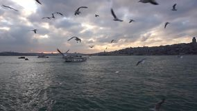 Silhouettes of historical peninsula, passenger ships with flying seagulls. And the entrance of the Bosphorus, view from Karakoy, Istanbul stock video