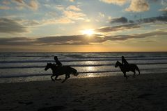 Silhouettes of horses on the beach of the ocean at sunset. In Brittany in France Stock Image