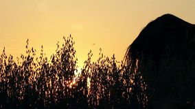 Silhouettes of horses at sunset Stock Image