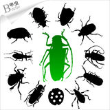 Silhouettes of insects - beetle. The various postures of the beetles.Increased by Adobe Illustrator EPS Vector Format Stock Image