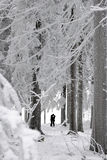 Silhouettes of a kissing couple. In a winter landscape Royalty Free Stock Photo