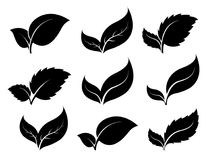 Silhouettes leaf icons. Set of silhouettes leaf icons  on white background. Leaves icon vector. illustration Royalty Free Stock Photography