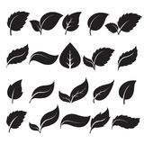 Silhouettes leaf icons. Set of silhouettes leaf icons on white background. Leaves icon vector. illustration Stock Illustration