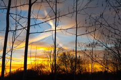 Silhouettes of a leafless tree branches on colorful sunset and cloudy blue sky with plane trail as a backgrond. Autumn in Finland.  royalty free stock photo