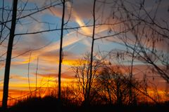 Silhouettes of a leafless tree branches on colorful sunset and cloudy blue sky with plane trail as a backgrond. Autumn in Finland.  stock images