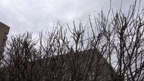 Silhouettes of leafless tree with buds on a dark blue sky background. Footage. Trees without leaves stock footage.  stock footage