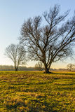 Silhouettes of leafless trees in afternoon sunlight. Silhouettes of some tall bare trees in the late afternoon of a sunny day in the Dutch winter season Stock Photography