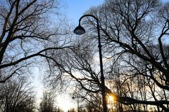 Silhouettes of leafless trees and street light and sun against blue sky on sunset in city park. Royalty Free Stock Photos