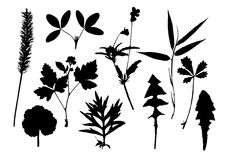 Silhouettes of leaves Royalty Free Stock Photo