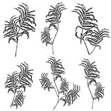 Silhouettes of leaves, botanical illustration isolated on white background, .Monochrome floral drawing. Hand drawn Stock Images