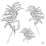 Silhouettes of leaves, botanical illustration  on white background, .Monochrome floral drawing. Hand drawn Royalty Free Stock Photo