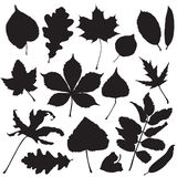 Silhouettes of leaves Stock Image