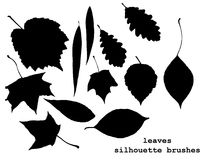 Silhouettes of leaves Royalty Free Stock Image