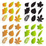 Silhouettes of Leaves Royalty Free Stock Photography