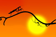The silhouettes of mantis and the spider on  fine twig Stock Photo