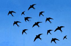 Silhouettes of many swallows Stock Photo