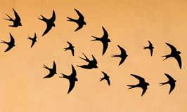 Silhouettes of many swallows. On a orange background royalty free stock photos