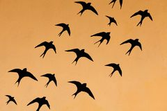 Silhouettes of many swallows Royalty Free Stock Images